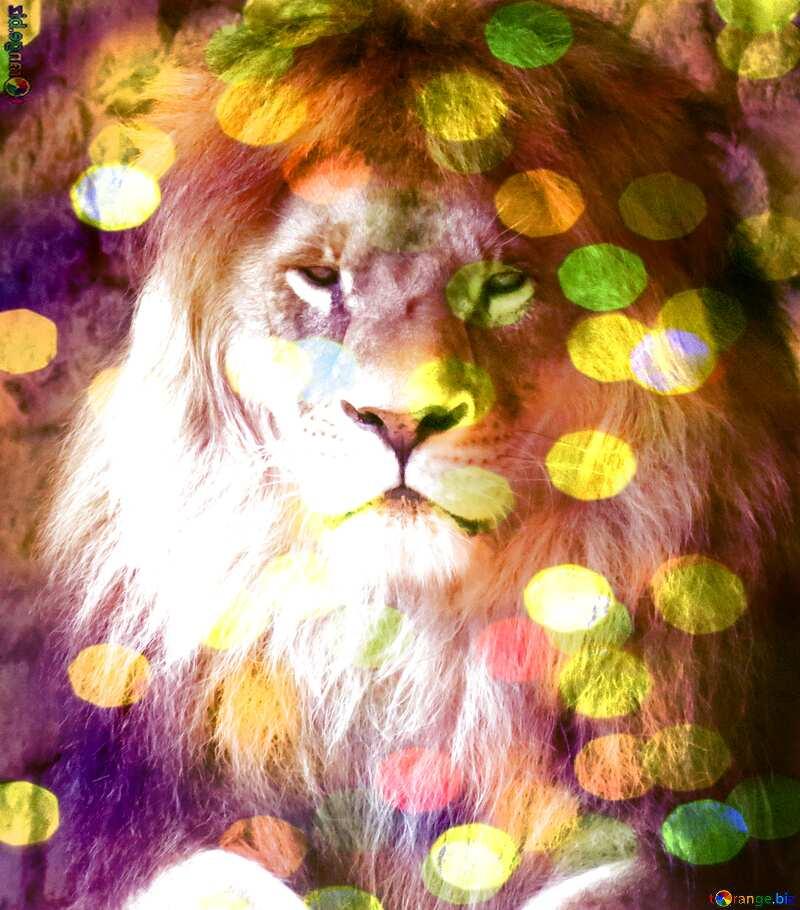lion bokeh background №44974