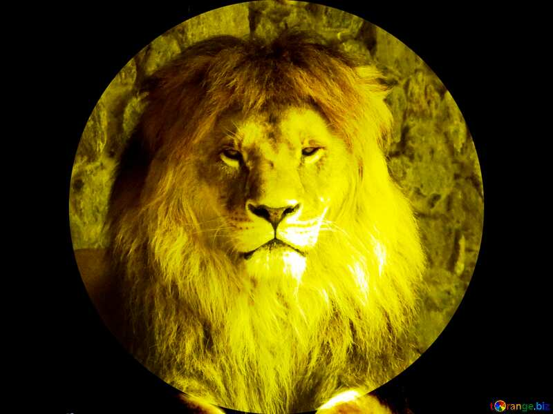 lion template №44974