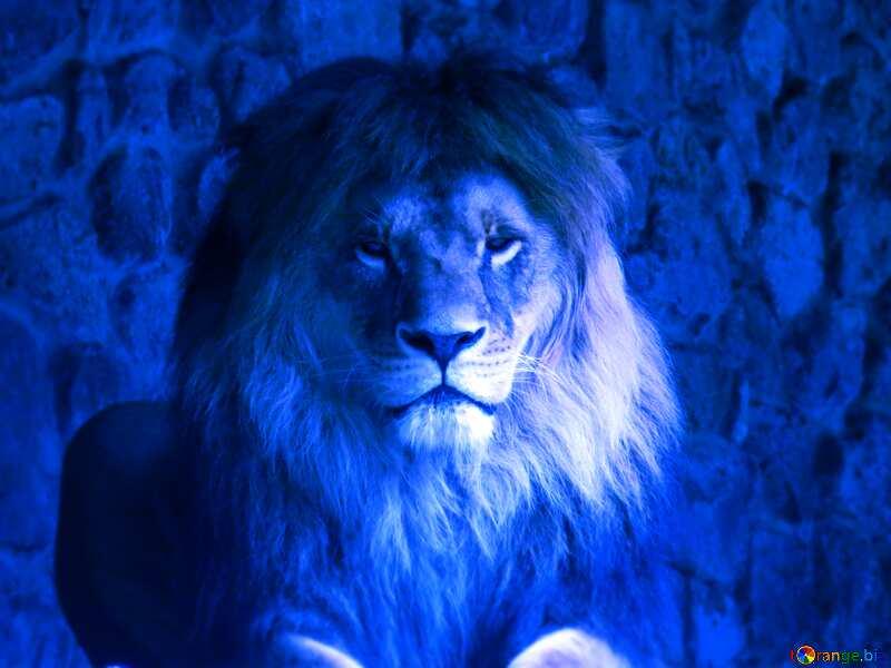 A lion dark blur №44974