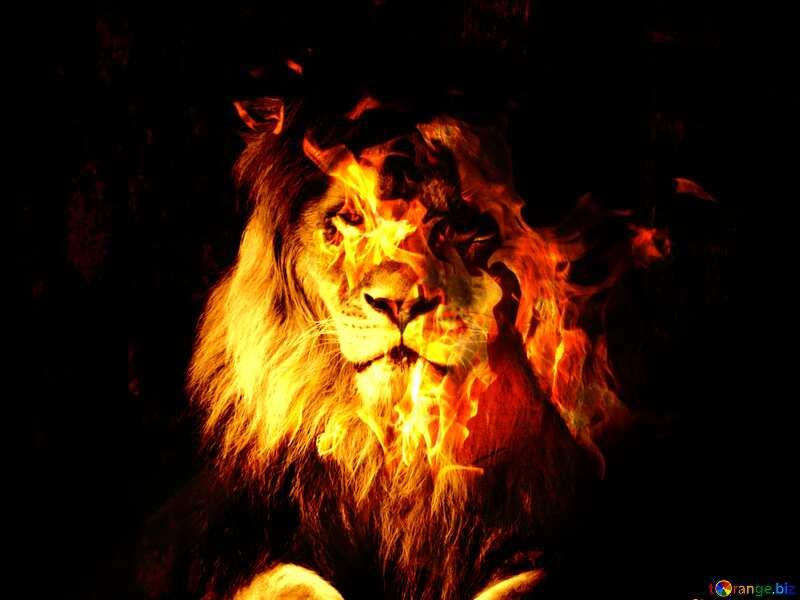 lion Fire №44974