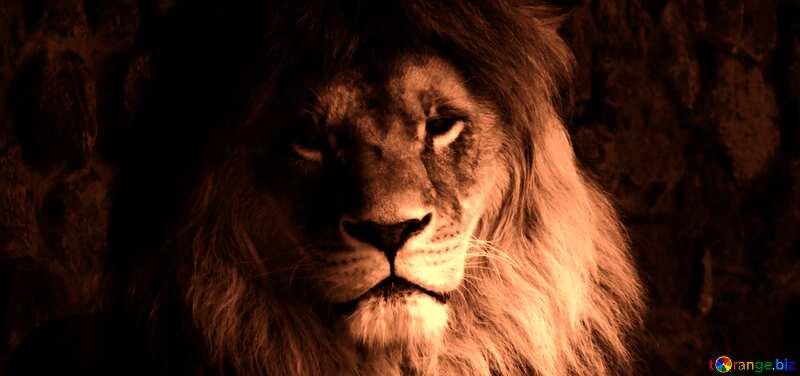 lion dark №44974
