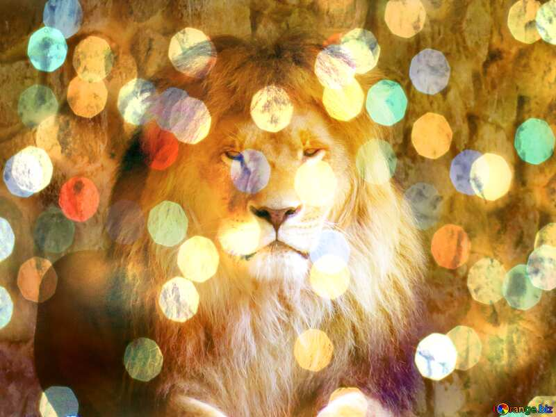 lion background bokeh №44974