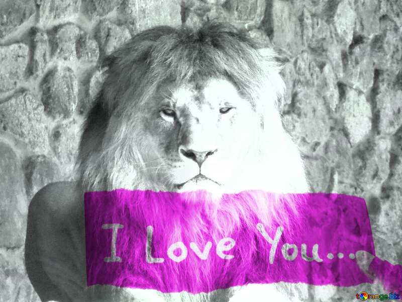 lion I love you №44974