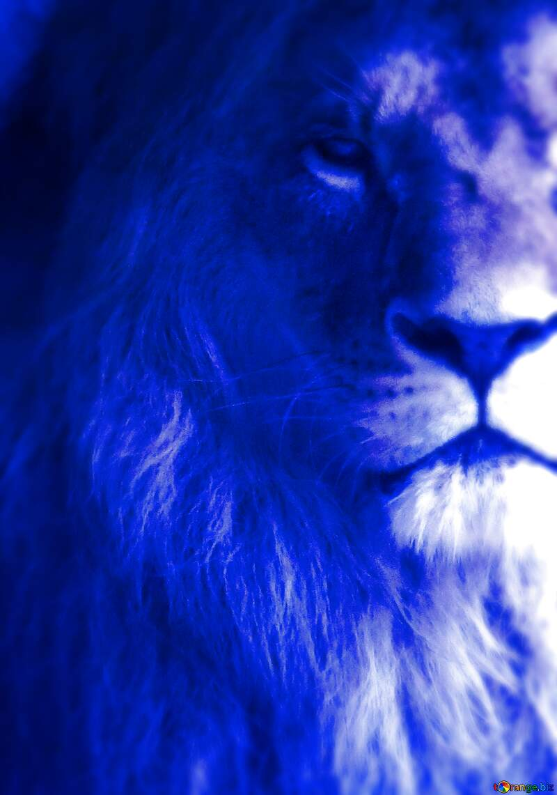 lion blue fragment №44974