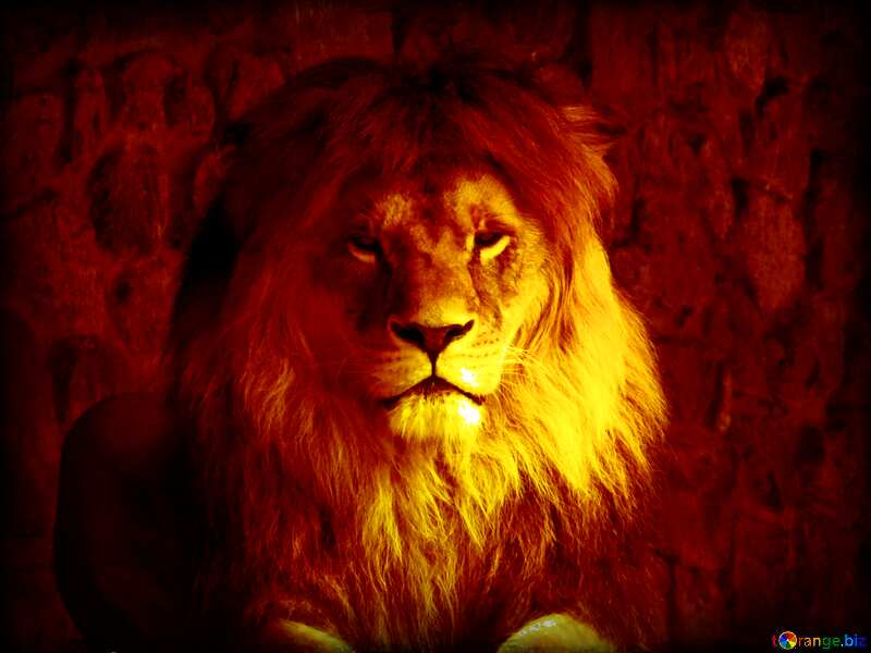 lion dark frame №44974
