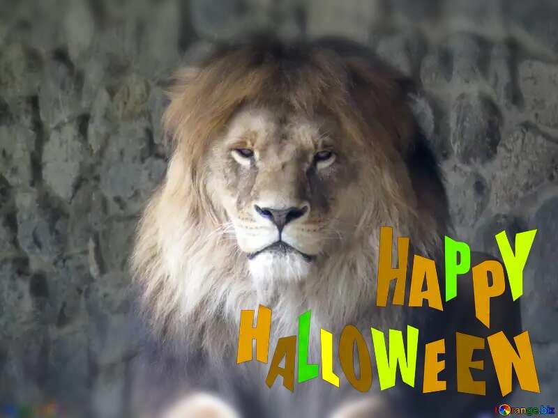 lion happy halloween №44974