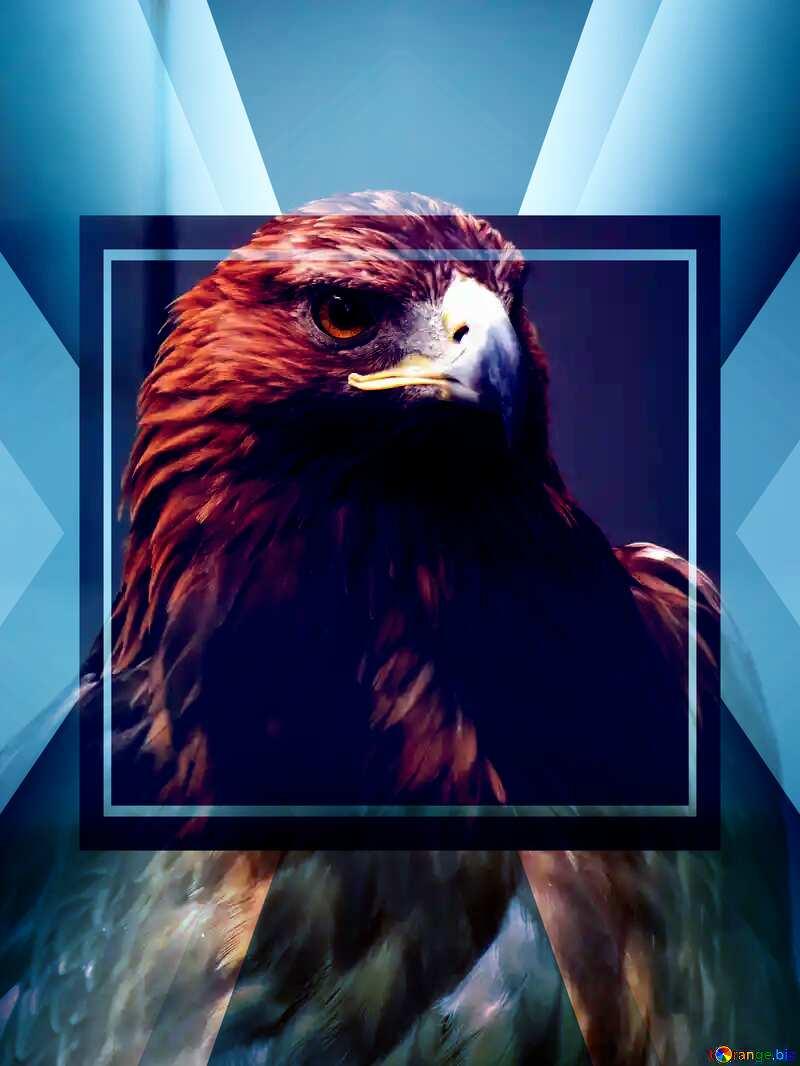 Golden eagle powerpoint website infographic template banner layout design responsive brochure business №45229
