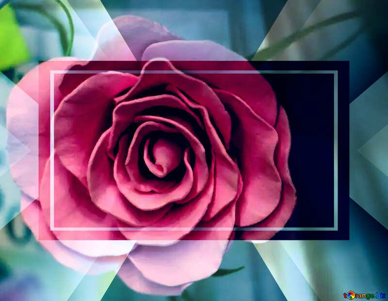 Rose flower from foamirana  powerpoint website infographic template banner layout design responsive brochure business №48638