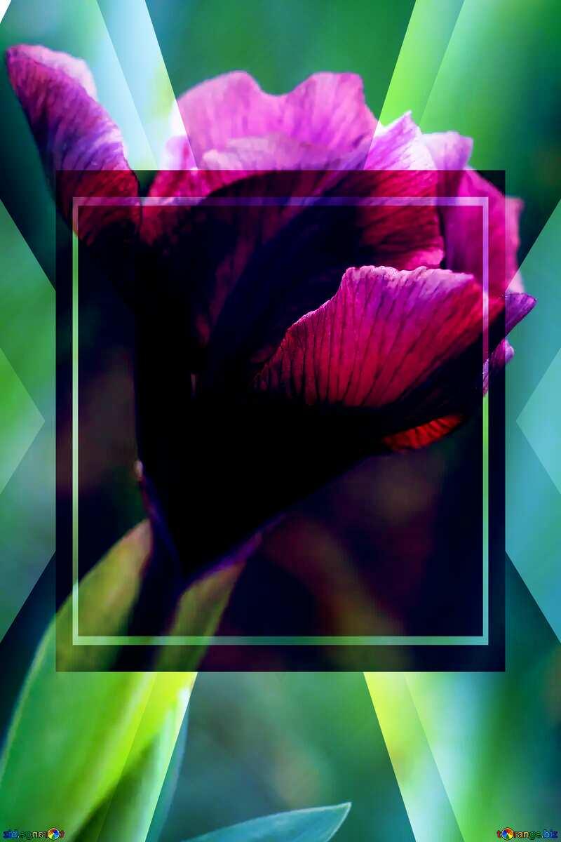 Iris flower bud powerpoint website infographic template banner layout design responsive brochure business №37687