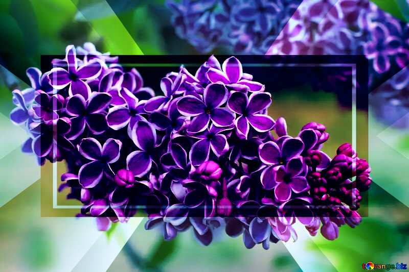 Lilac flowers with light contour powerpoint website infographic template banner layout design responsive brochure business №37405