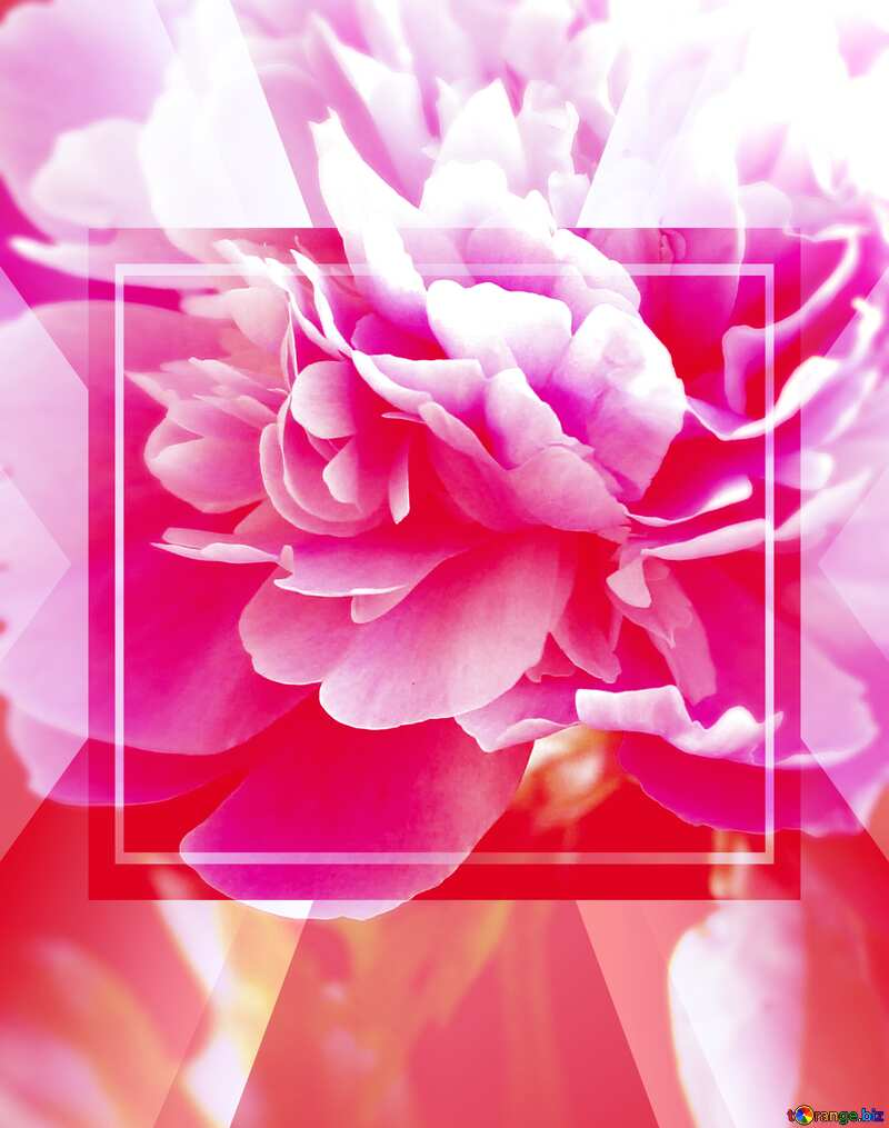 Peony flowers Card Infographic background №32661