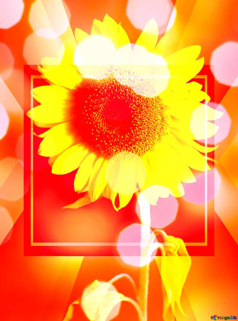 Happy New Year Sunflower flower bokeh background frame №32798