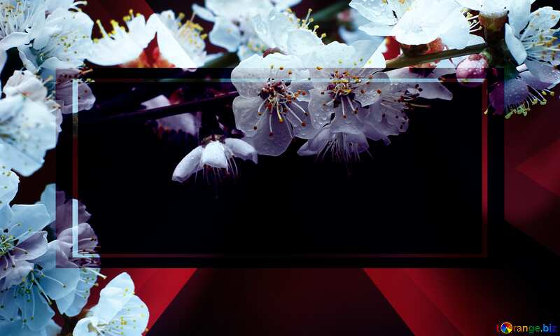 Sprig of flowering apricot template card frame inscription Spring is Coming №29870