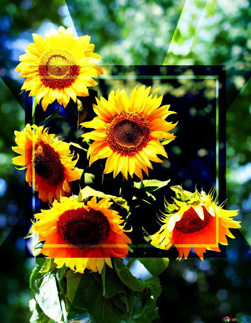 A large bouquet of sunflowers powerpoint website infographic template banner layout design responsive brochure business №32700