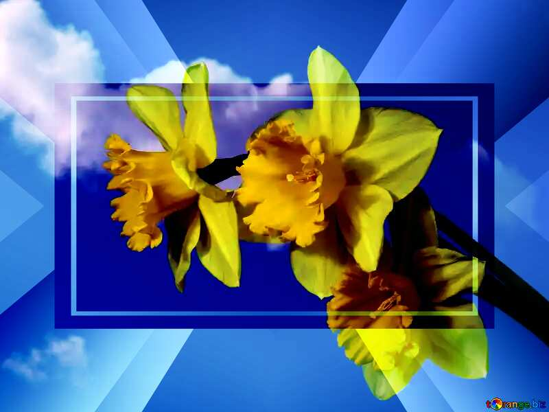 Yellow daffodils on blue sky powerpoint website infographic template banner layout design responsive brochure business №30959