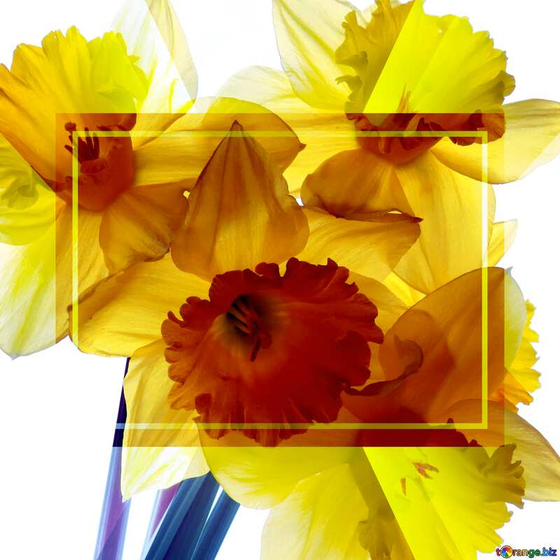 A four spring yellow lowers bouquet powerpoint website infographic template banner layout design responsive brochure business №30946