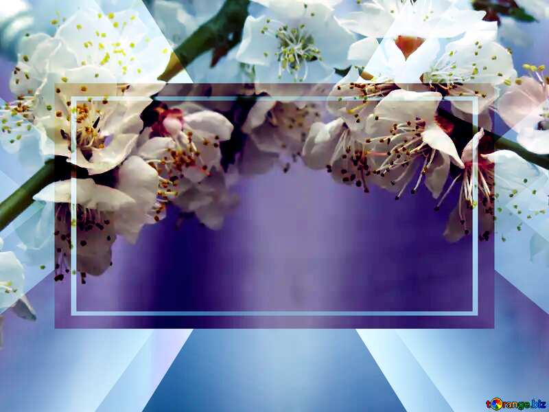Spring blossoms Colorful card template frame on Background with Rays of sunlight powerpoint website infographic template banner layout design responsive brochure business №30029
