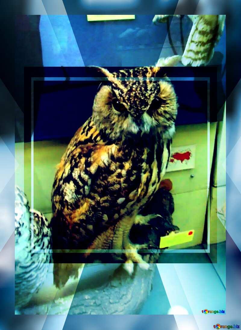 Bird stuffed owl powerpoint website infographic template banner layout design responsive brochure business №21300