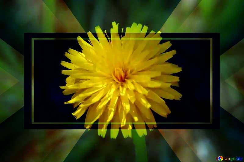 Dandelion yellow powerpoint website infographic template banner layout design responsive brochure business №23056
