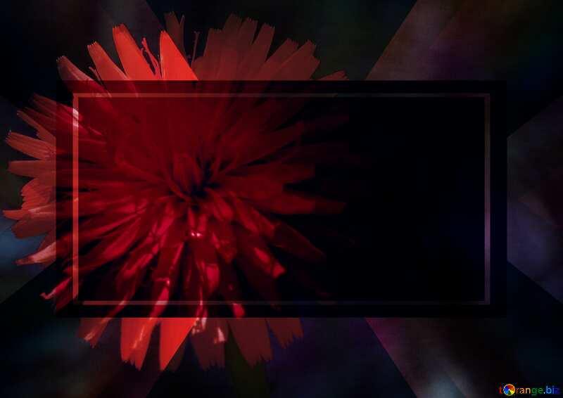 Red Dandelion dark flower background powerpoint website infographic template banner layout design responsive brochure business №23056