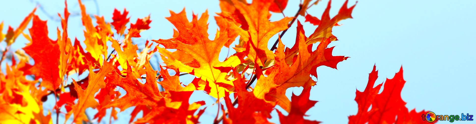 Download Free Picture Cover Autumn Desktop Wallpapers On Cc By