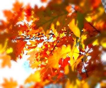 Vivid Colors. Blur frame. Fragment.