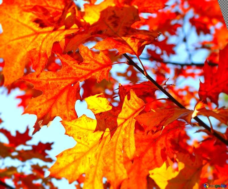 Cover. Beautiful autumn leaves. №38534