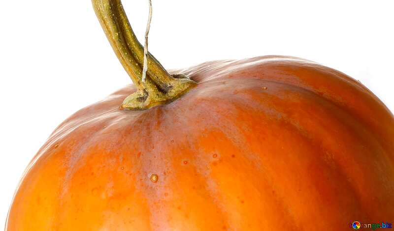 Cover. Pumpkin in isolation without background. №34970