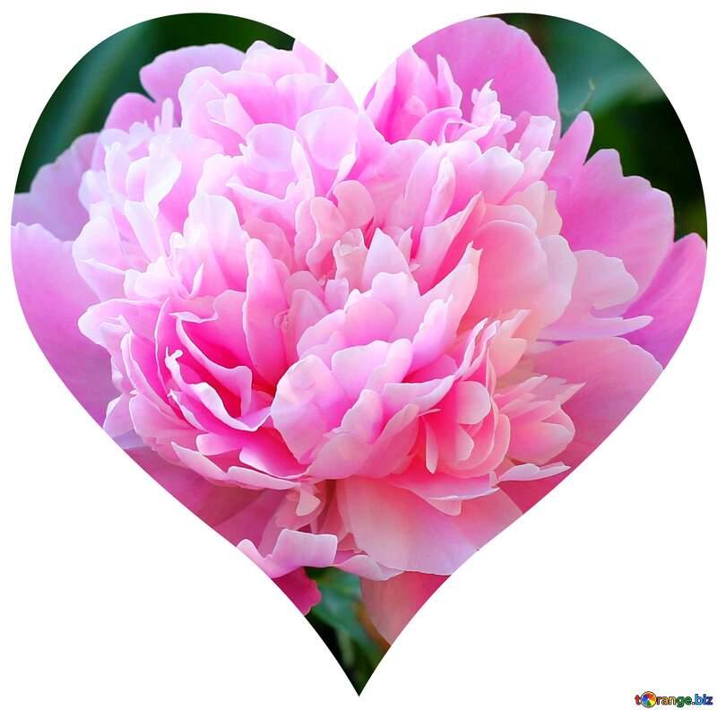 Heart of flower №32639