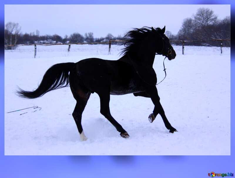 Horse on snow №3951