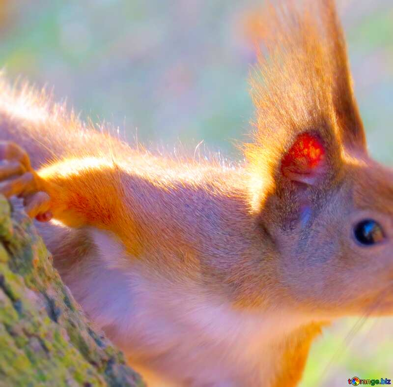 Image for profile picture Animal Squirrel . №35682