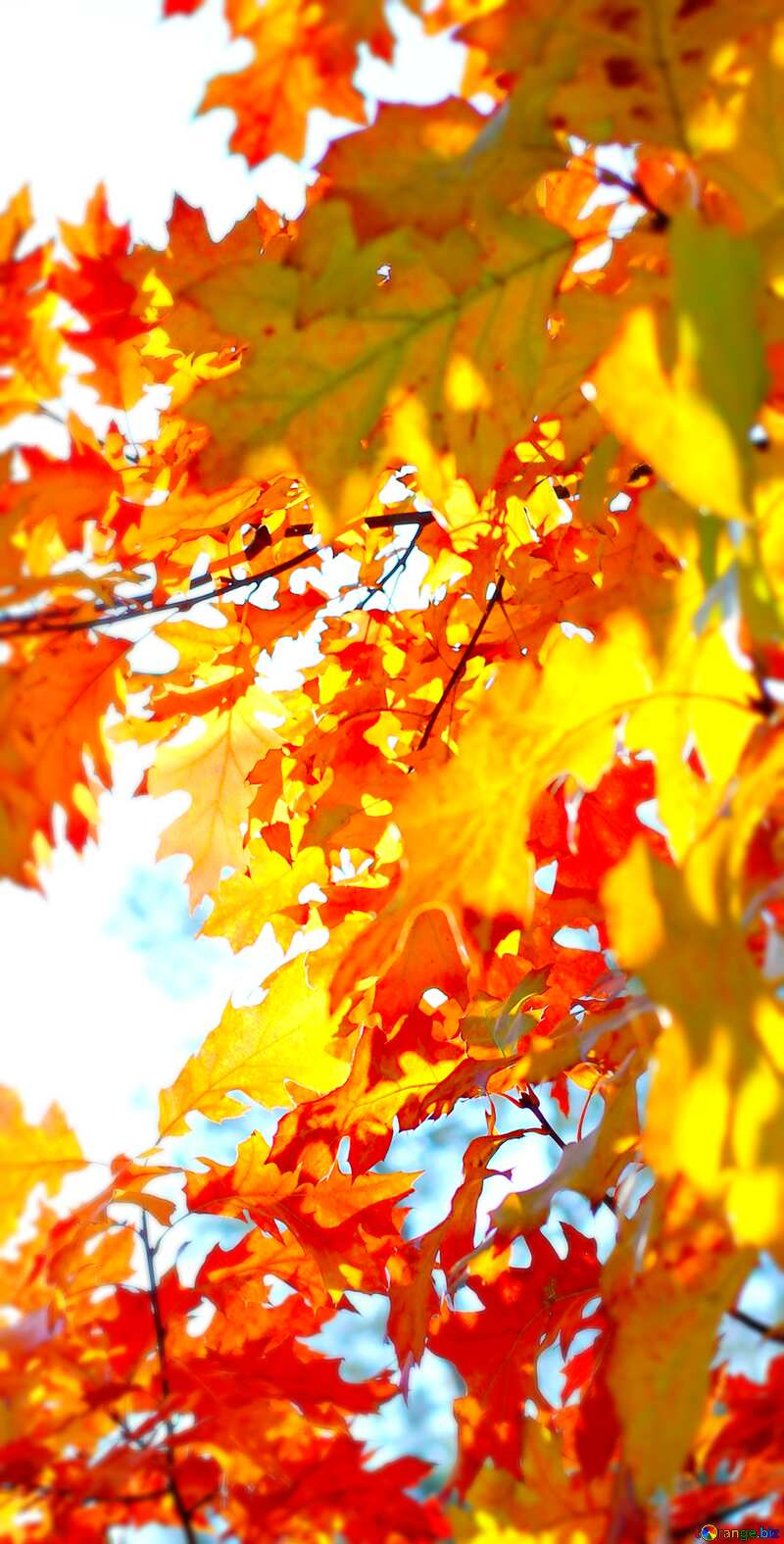 Image for profile picture Beautiful leaves. №38542