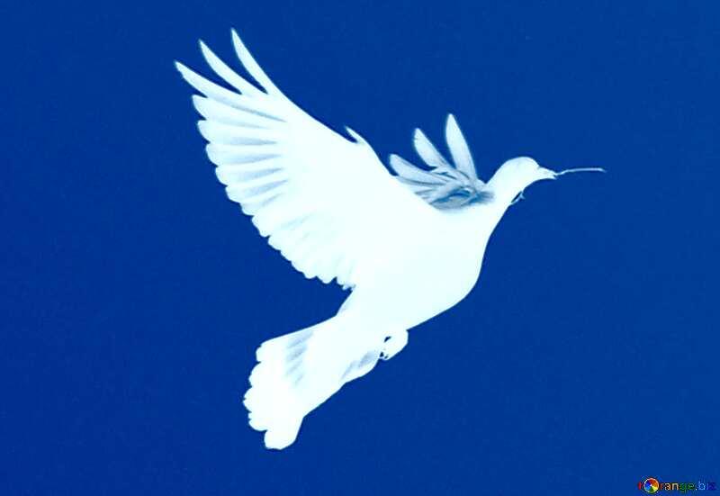 Image for profile picture Dove of peace. №33802