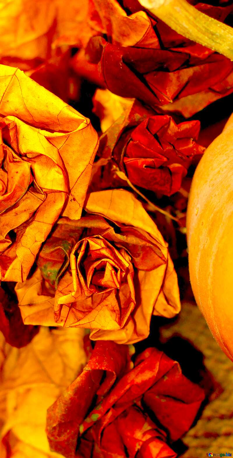 Image for profile picture Pumpkin in the fall. №36021