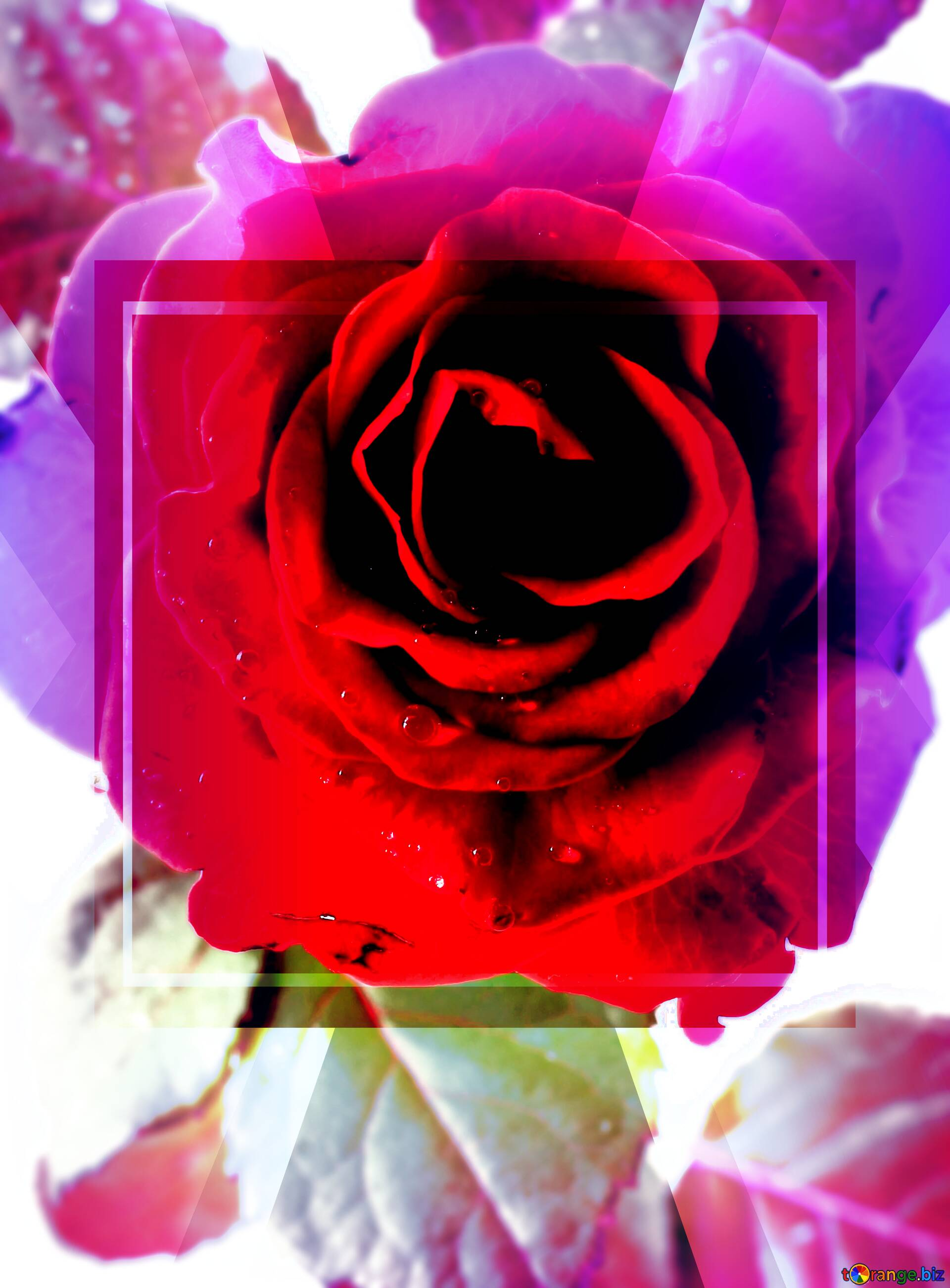 Download free picture Banner Design Infographic Rose ...