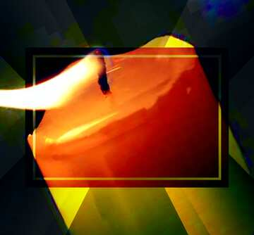 The effect of hard light. Very Vivid Colours. Fragment.