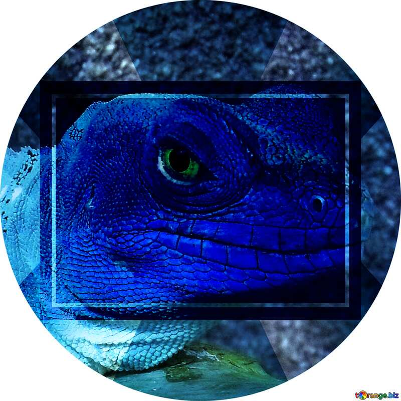 Lizard blue Image Infographic Layout Template №10697
