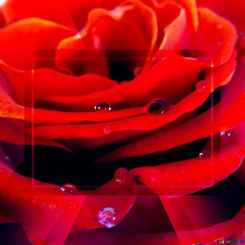 Rose flower Template №17124