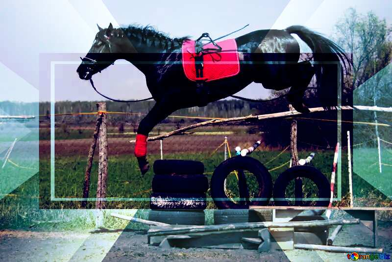 Jumping horse Template №11050