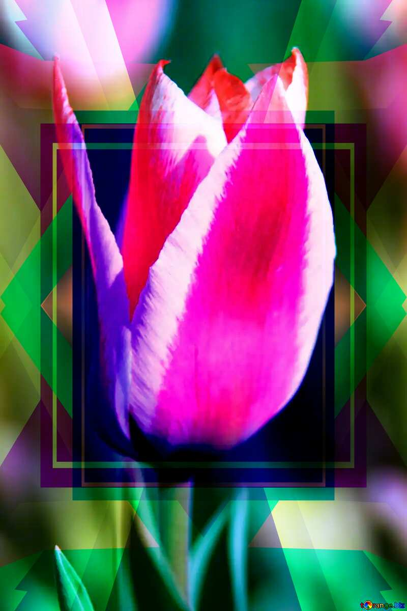 Pink Tulip Template Illustration Design Frame №1662