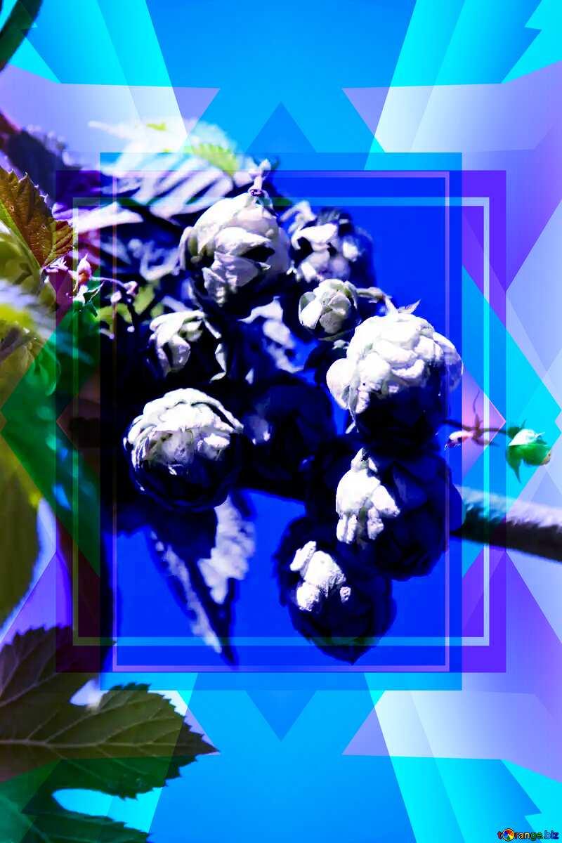 Folk medicine. Hops. Illustration Frame Design Template №4207