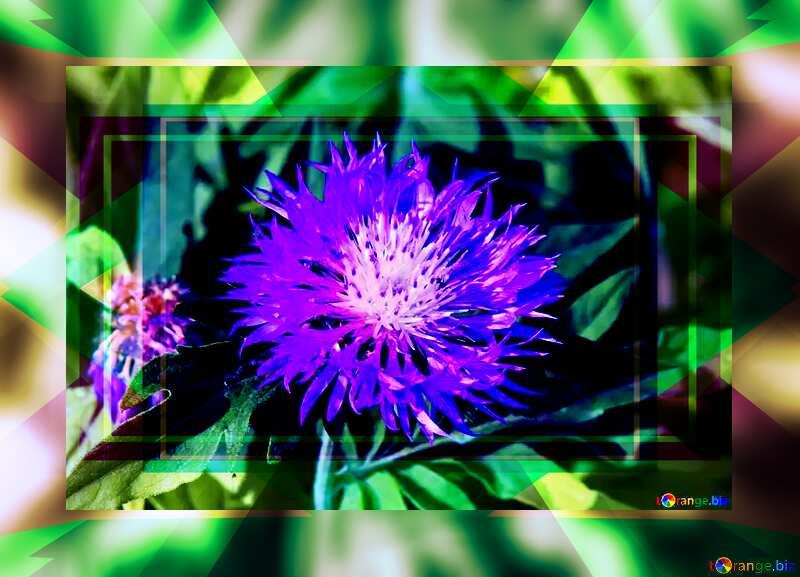 Violet Cornflower Template Design Frame №3248