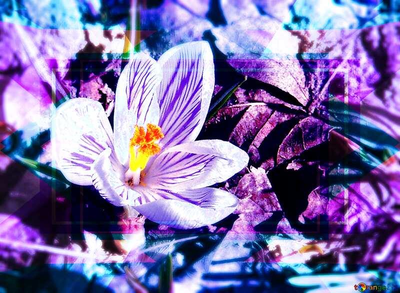 Crocus flower background Design Frame Template №1157