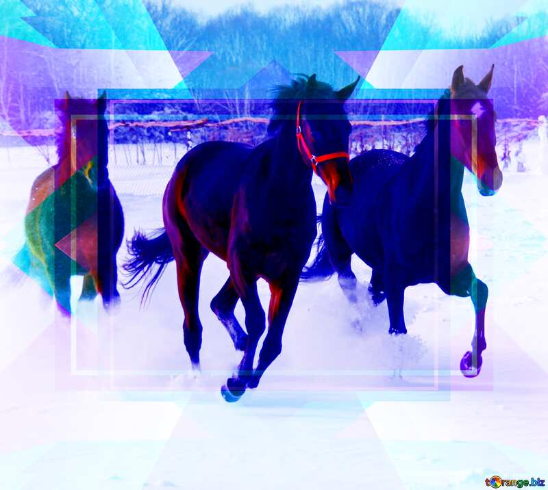 Three horses on the snow Banner Frame Template Layout Illustration №3981