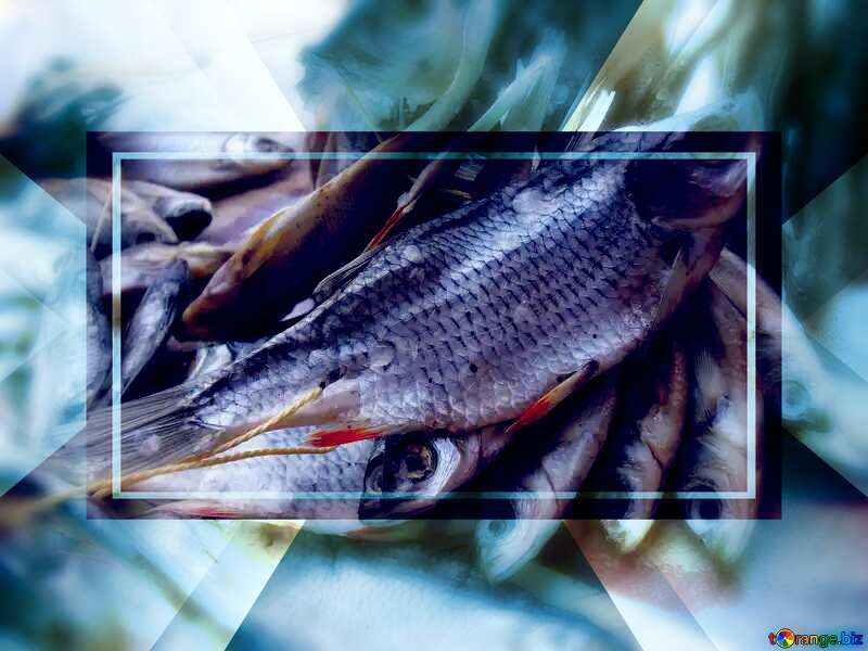 Dried roach fish Template №9820
