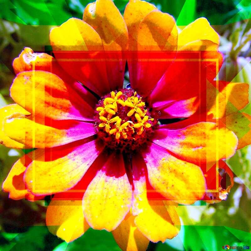 Flower Design Frame Layout Template №3219