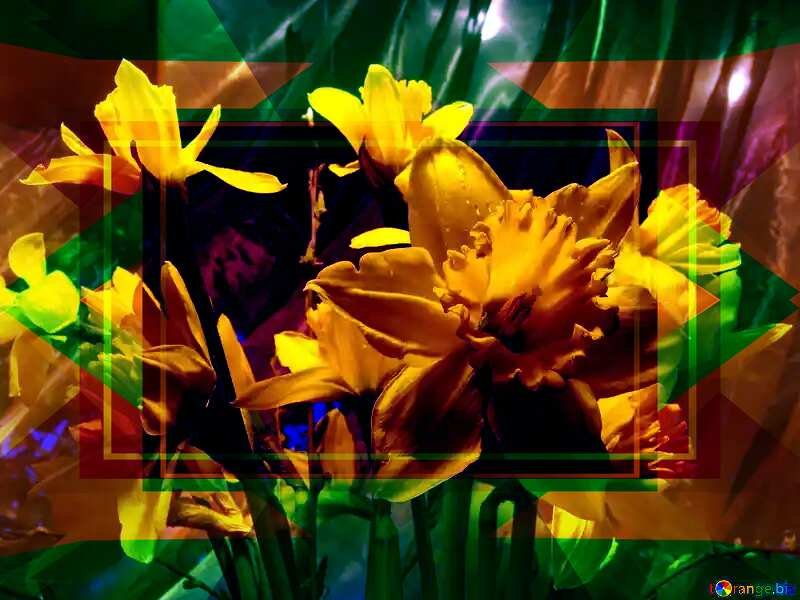 Bouquet of yellow daffodils on an orange background Infographic Design Frame №526