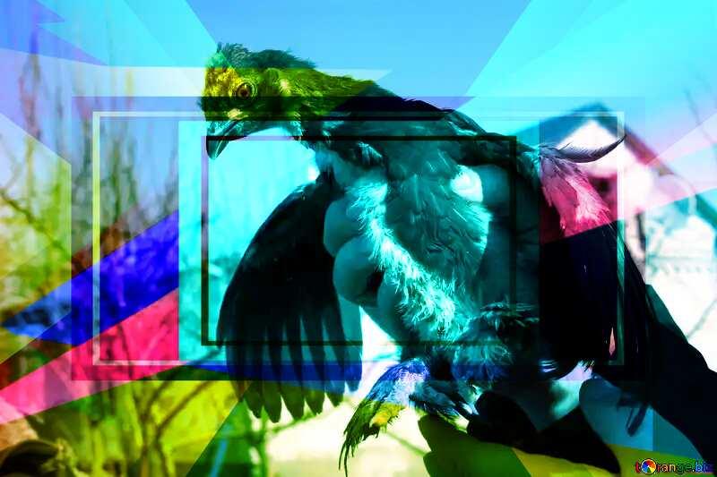 Dove Colorful illustration template frame responsive №1211