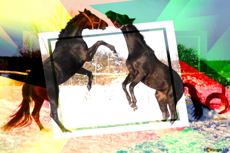 Two stallions horse ascertain relationships Creative abstract Geometrical Future Trend template frame №3958