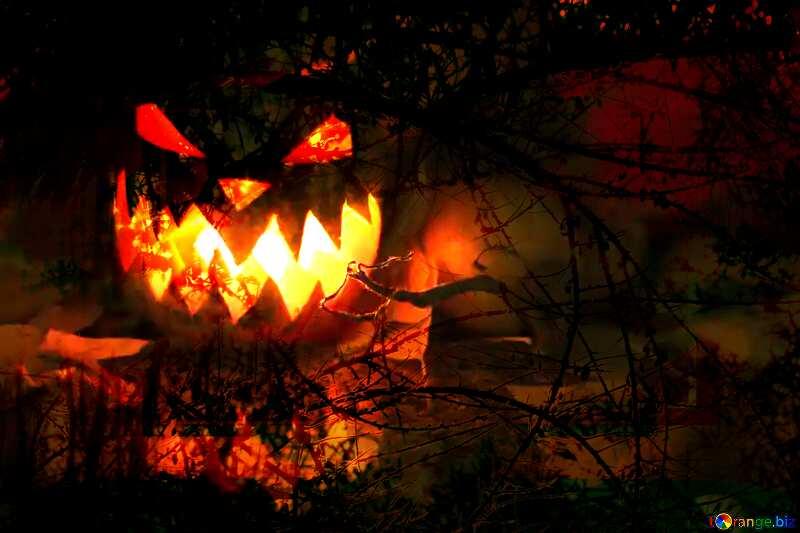 Light from pumpkin on Halloween Spooky forest №24284